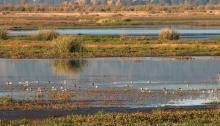 Wood River wetlands